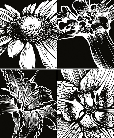 Set of floral graphic backgrounds  Vector