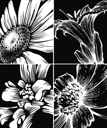 patula: Set of floral graphic backgrounds
