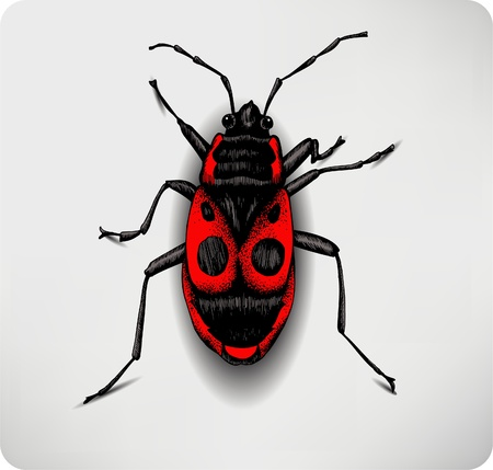 Red beetle, hand-drawing.  Vector