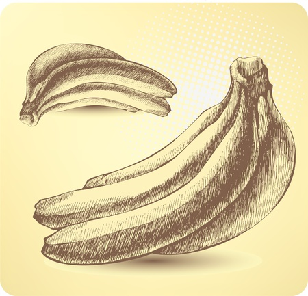 Bunch of ripe bananas, hand-drawing.  Vector