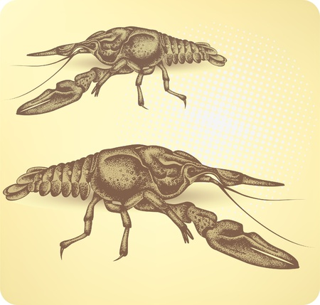 Crayfish, hand-drawing. Vector illustration. Vector
