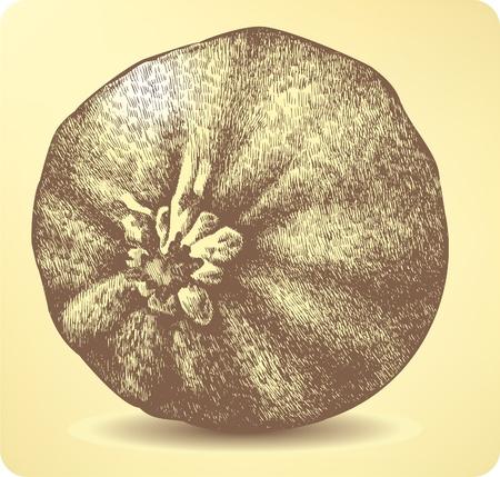 large pumpkin: Vegetable pumpkin, hand-drawing