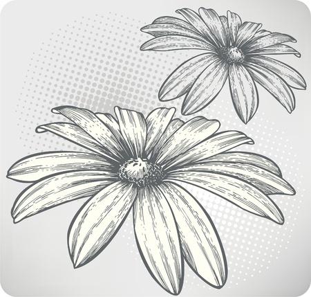flowery: Florecimiento de las flores, dibujo a mano. Ilustraci�n del vector. Vectores