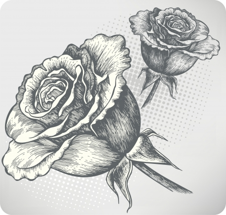 Blooming Rose vintage, hand-drawing. Vector illustration.