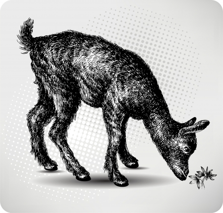 capra: Small goat in the pasture, hand drawing, illustration.