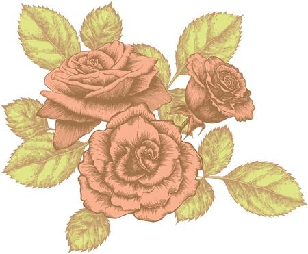 dibujo vintage: Ramo de rosas en flor, dibujo a mano