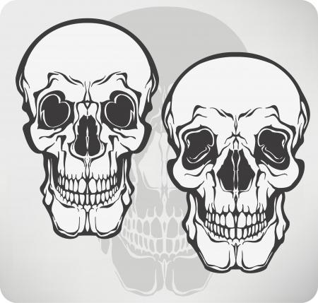 Skull, vector illustration. Vector