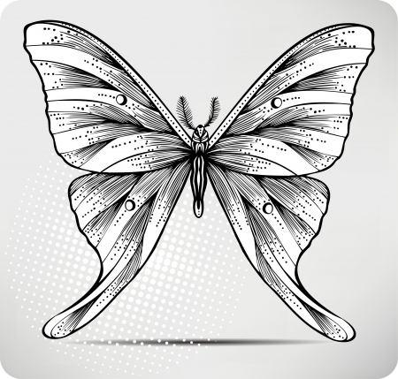 Butterfly, hand drawing. illustration. Vector