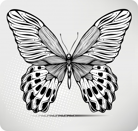 Butterfly, hand-drawing. illustration.