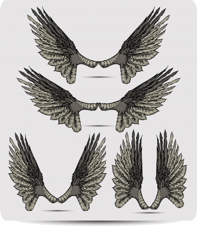 Wings set the raven, hand drawing. Vector illustration. Vector