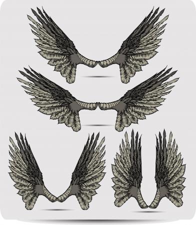 griffon: Wings set the raven, hand drawing. Vector illustration. Illustration