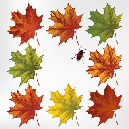 Maple leaves in autumn, set. Vector illustration Vector