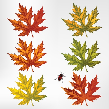 Maple leaves, set. Vector illustration Stock Vector - 14960762