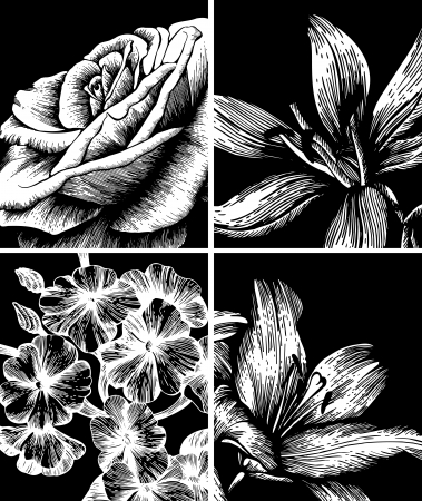 hand drawn rose: Set of decorative floral background, hand drawing. Vector.