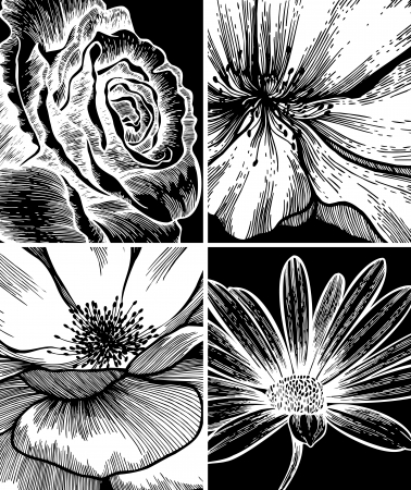 Set of floral backgrounds; hand drawing. Vector illustration. Vector