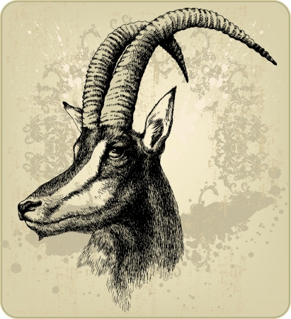 niger: Hippotragus niger, hand-drawing  Vector illustration