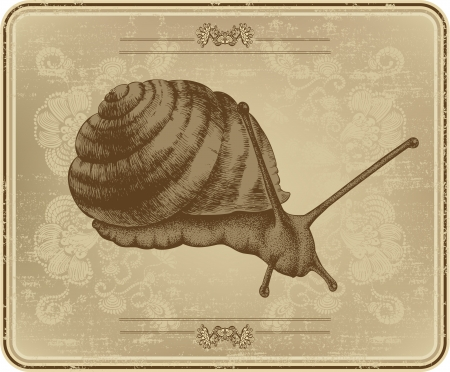 Menu with snail, hand drawing Stock Vector - 16168032