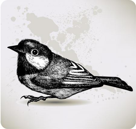 Bird titmouse Stock Vector - 16168045