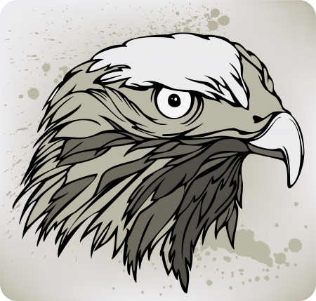 Buzzard hawk, hand drawing. Vector illustration. Vector