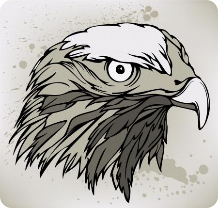 buzzard: Buzzard hawk, hand drawing. Vector illustration. Illustration