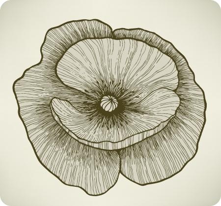 single color image: Poppy flower, hand drawing.  illustration.