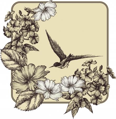 pajaro dibujo: Fondo con las rosas en flor, phlox y un pájaro volando. ilustración.