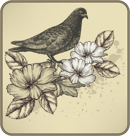 drawing dove: Vintage background with bird dove and blooming roses. Illustration