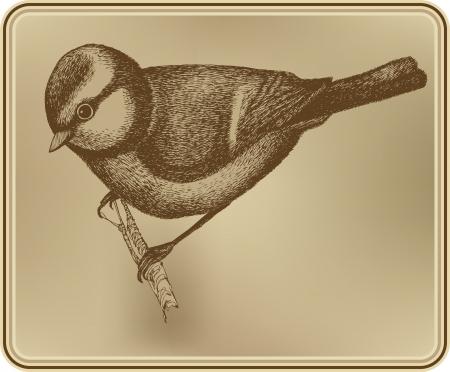 titmouse: Bird titmouse Illustration