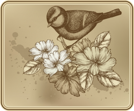 titmouse: Floral background with a bird titmouse and blooming roses.