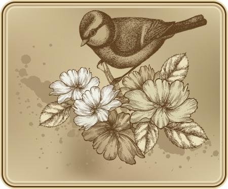 pajaro  dibujo: Fondo floral con una titmouse pájaro y las rosas en flor.