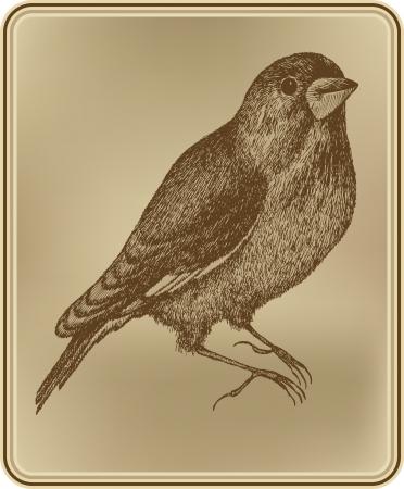 sketch: Bird sitting, hand drawing  Vector illustration  Illustration