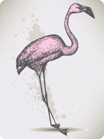 wader: Pink flamingo bird, hand-drawing. Vector illustration.