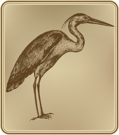 Heron bird, hand-drawing.  illustration. Vector
