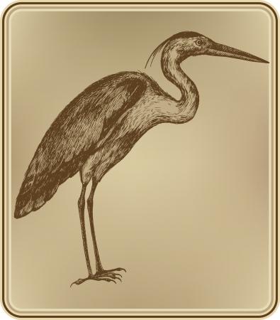 airone: Heron uccello, disegno a mano. illustrazione. Vettoriali