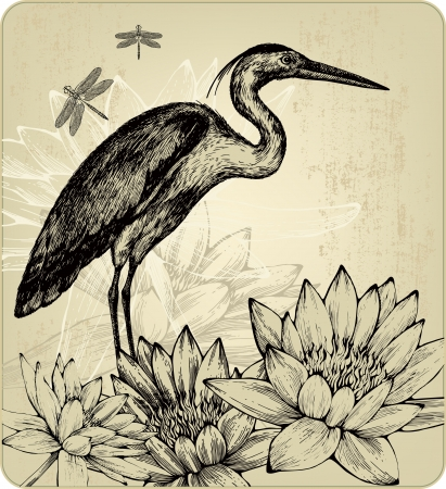 Background with blooming water lilies, bird herons and dragonflies illustration  Vector