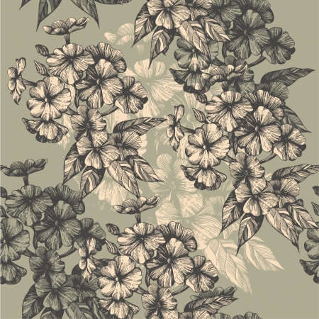 hand drawing: Seamless pattern with blooming phlox, hand-drawing. Vector illustration.