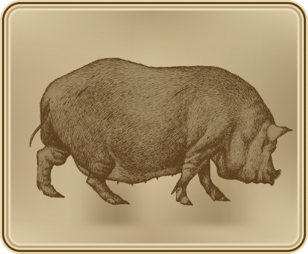 Pig, hand drawing, vector illustration  Vector