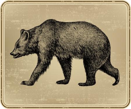 oso negro: Animal salvaje oso, dibujo a mano. Ilustración del vector.