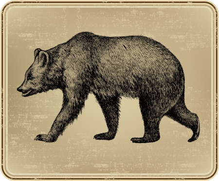 Animal wild bear, hand-drawing. Vector illustration.