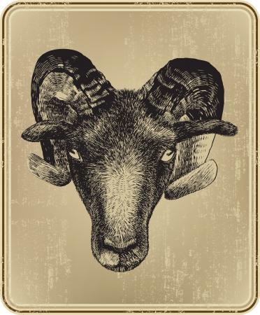 animal ram: Animal ram hand-drawing. Vector illustration.