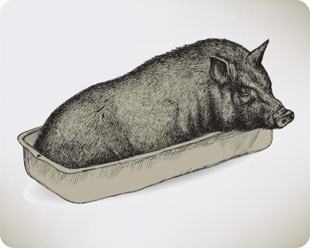 pig iron: Animal pig