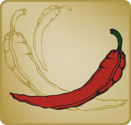 hot pepper: Red hot chilli pepper. Vector illustration. Illustration