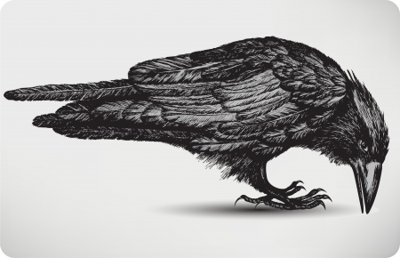 Black raven bird, hand-drawing. Vector illustration. Vector