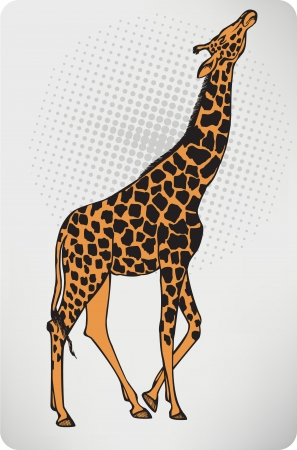 Animal giraffe. Vector illustration. Vector