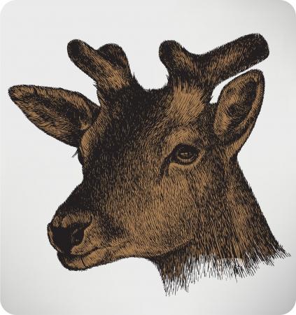 black deer: Animal deer with horns, hand-drawing. Vector illustration.