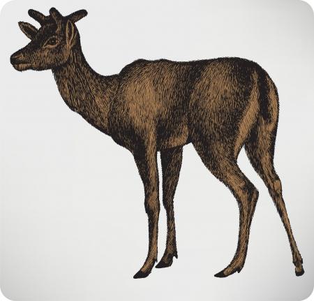 dappled: Animal dappled deer with horns, hand-drawing. Vector illustration.