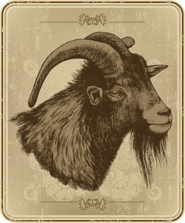 horny: Vintage menu with horny goat, hand-drawing. Vector illustration.