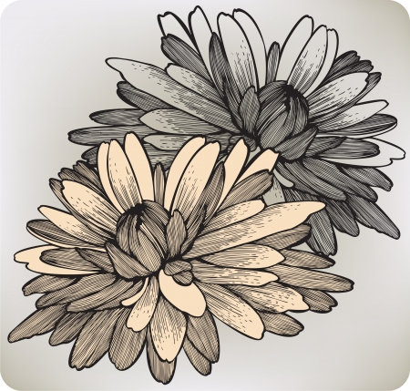 stench: Chrysanthemum flower, hand-drawing. Vector illustration.