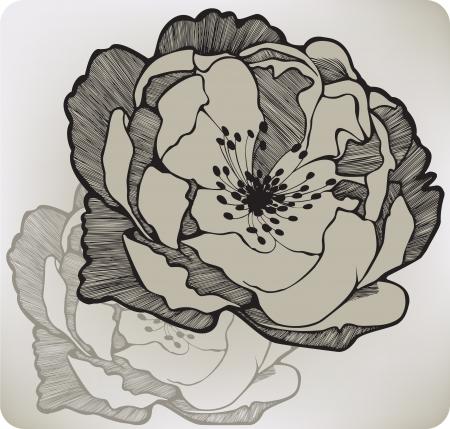 Wild rose flower, hand-drawing.