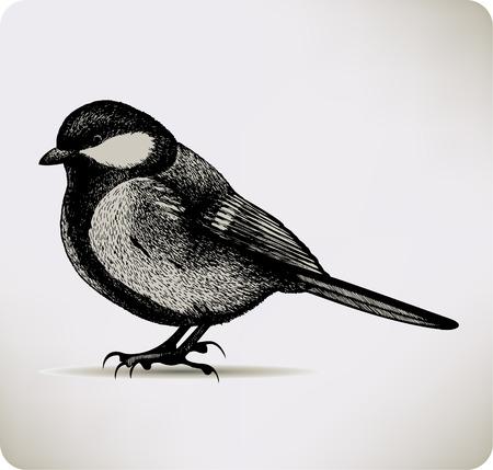 titmouse: Bird titmouse. Vector illustration.